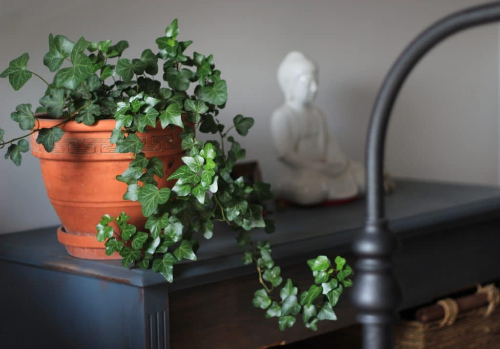 Bring an elegant touch and tropical visual to your space with the Hedera Helix plant