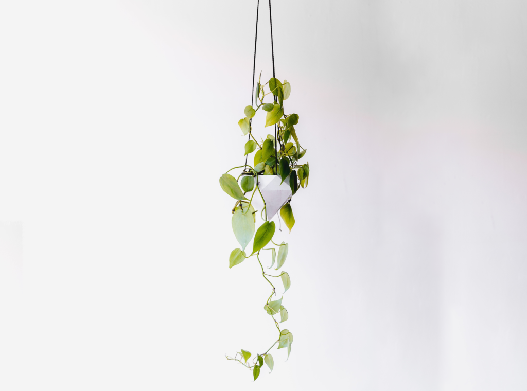 There is no brainer to choose the golden pothos plant for your bathroom