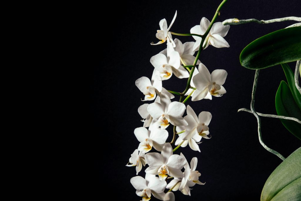 An orchid plant will compliment your design in good taste.